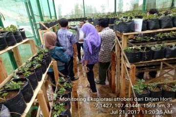Exsplorasi dan Identifikasi Tanaman Lokal Hortikultura